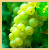 http://www.vins-bourgogne.fr/gallery_images/site/3/233/344/350/356.jpg