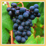 http://www.vins-bourgogne.fr/gallery_images/site/3/233/344/350/357.jpg