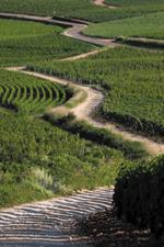 http://www.vins-bourgogne.fr/gallery_images/site/3/233/344/3593/15516.jpg