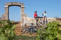 http://www.vins-bourgogne.fr/gallery_images/site/3/233/344/3593/15517.jpg