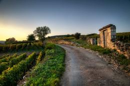 © BIVB / IBANEZ A. Route viticole à Pommard