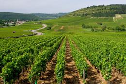 Route des Vins © BIVB