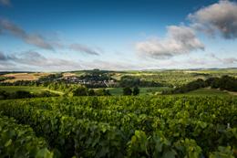 © BIVB / IBANEZ A. Village dans le vignoble de Chablis en Bourgogne : Chichée
