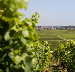 Parcelle dans le vignoble de la Côte Chalonnaise © BIVB / ARM.COM