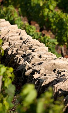 © BIVB / JOLY M. Muret dans les vignes de Bourgogne
