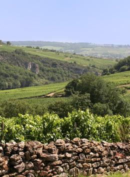 © BIVB / ARMELLEPHOTOGRAPHE.COM Meurger dans le vignoble du Mâconnais