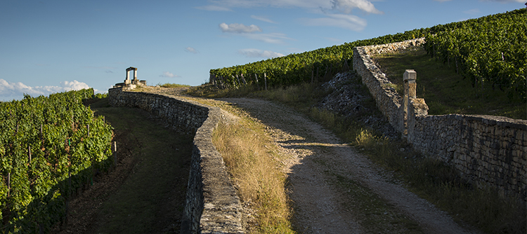Photos de Climats de Bourgogne